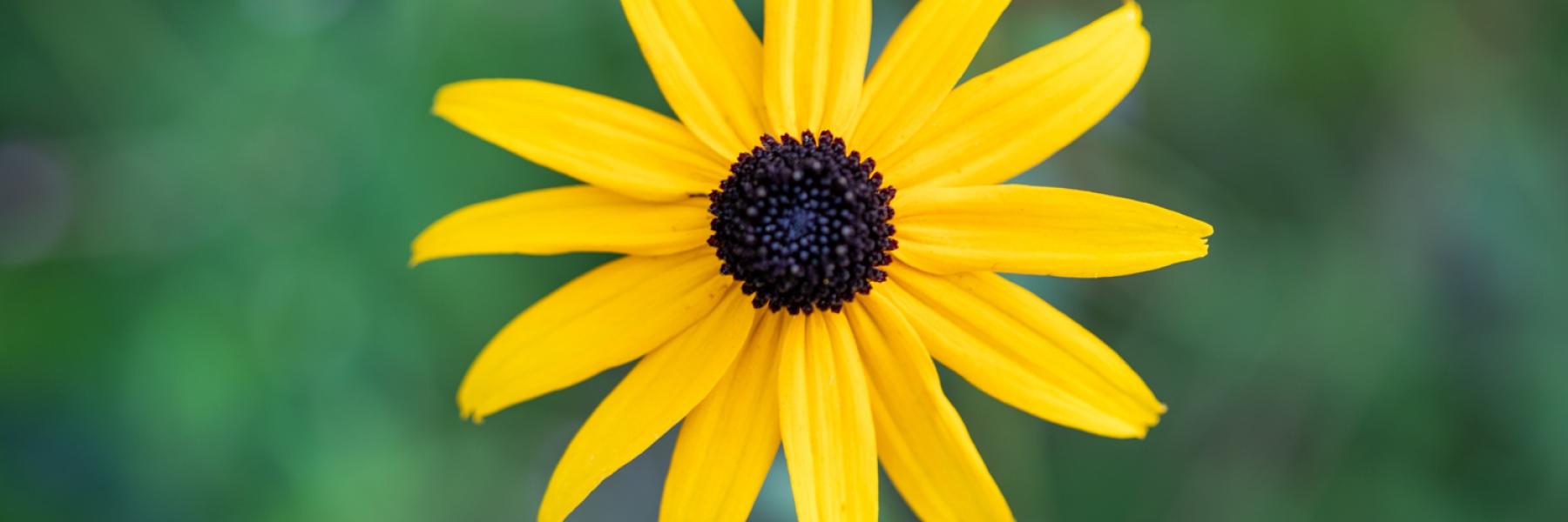 Image, Flower