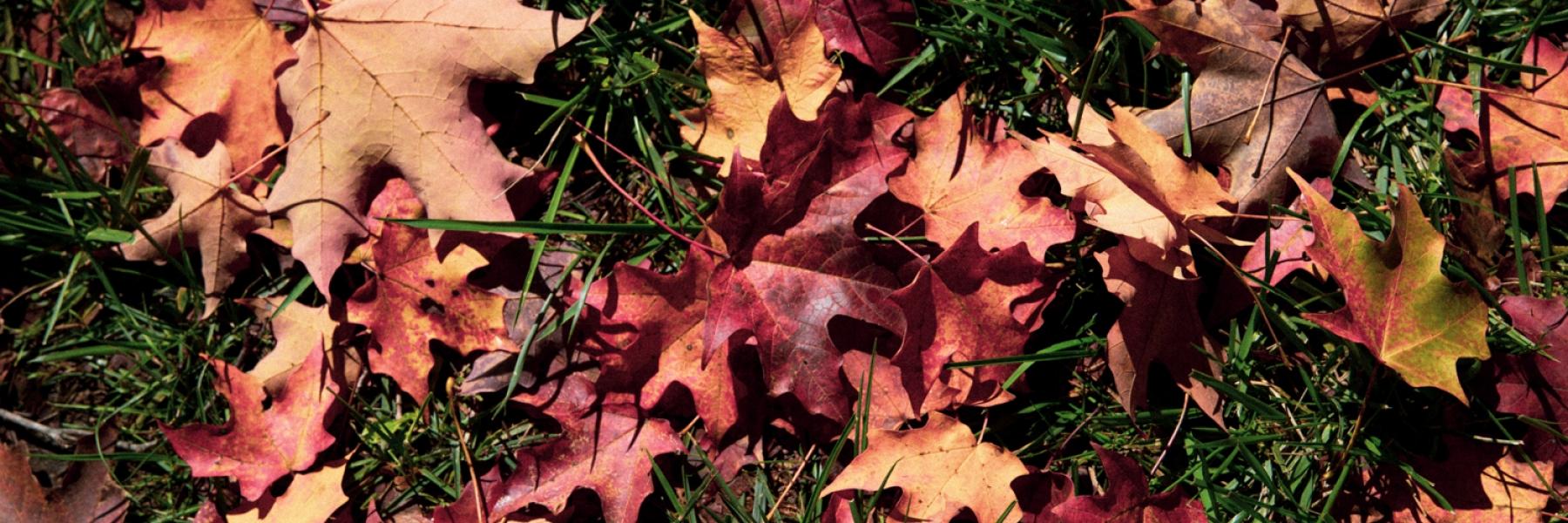 Image, Fall Leaves