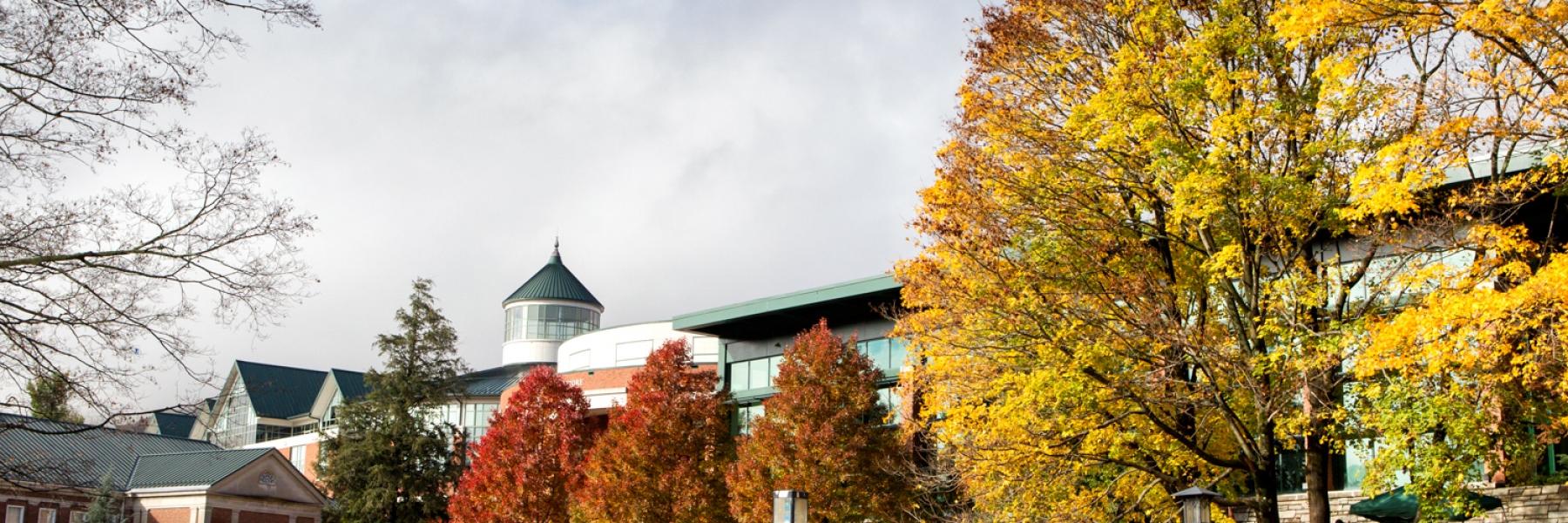 Image, Campus, Fall, Sunny